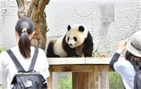 【動画あり】王子動物園も営業再開 返還間近の「タンタン」に再会