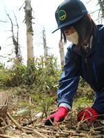 「蔵王の樹氷守れ」 樹林帯を苗移植で再生へ