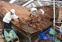 檜皮葺き屋根、伝統守る 伊弉諾神宮で葺き替え本格化 兵庫