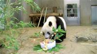 シャンシャン3歳「おうちで祝って」 誕生日動画を公開