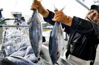 初夏の味覚カツオ水揚げ 福島・いわきの小名浜港