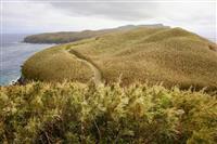 【島を歩く 日本を見る】竹島(鹿児島県三島村) 歴史の真実、竹の向こうに 小林希