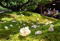 【動画】京都・東林院で沙羅の花を愛でる会 コロナ終息法要も