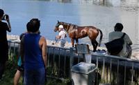 競走馬逃げ、運河泳ぐ 大井競馬場、対岸で捕獲 東京