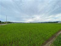 地球温暖化から新潟の米を守れ! 県が気候変動適応策を強化