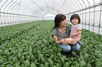 西日本豪雨2年 自宅浸水、農機具などすべて失った真備の農家 コロナ禍に立ち向かう