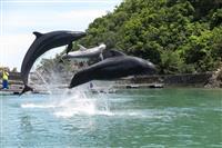 【くじら日記】クジラショー公開から13年