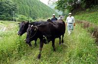 耕作放棄地を「牛の放牧」に活用 農水省の土地利用検討会で提起