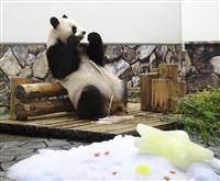 パンダに七夕飾りの贈り物 和歌山