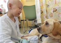 【いきもの語り】入院中の子供を癒す「ファシリティードッグ」アイビー