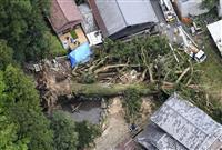 樹齢千年超のご神木倒れる 岐阜、大雨の影響で