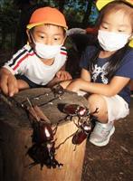 子供たち大はしゃぎ かぶとむしどーむ開園 兵庫・市川