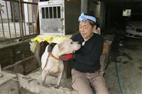 九州豪雨 被災ペット、どこへ行けば 避難所同伴できず、コロナ影響も 熊本