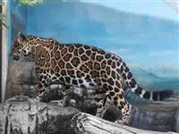 【マッキーの動物園日記】国内のジャガーの3分の1が子孫というベテランママに妊娠の兆候