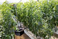 スマート農業、宮崎・新富町の挑戦 若手農家と起業家タッグ 町も交流促進協力