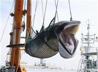 【直球&曲球】葛城奈海 商業捕鯨の捕獲枠再考を