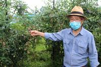 コロナに負けるな! ブルーベリーたくさん食べて 神鍋高原で無料開園 兵庫