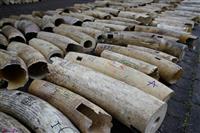 象牙取引禁止、都知事に要請 海外の環境団体