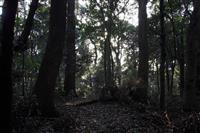 【100年の森 明治神宮物語】生命(中) 大都会で生きる森、予想外の変化も