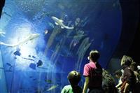 """幻想的""""夜のお魚たち"""" 大洗水族館で特別企画開催 茨城"""