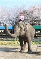 推定52歳・アジアゾウ「洋子」のお別れ会に100人 国内3番目の高齢 千葉・市原