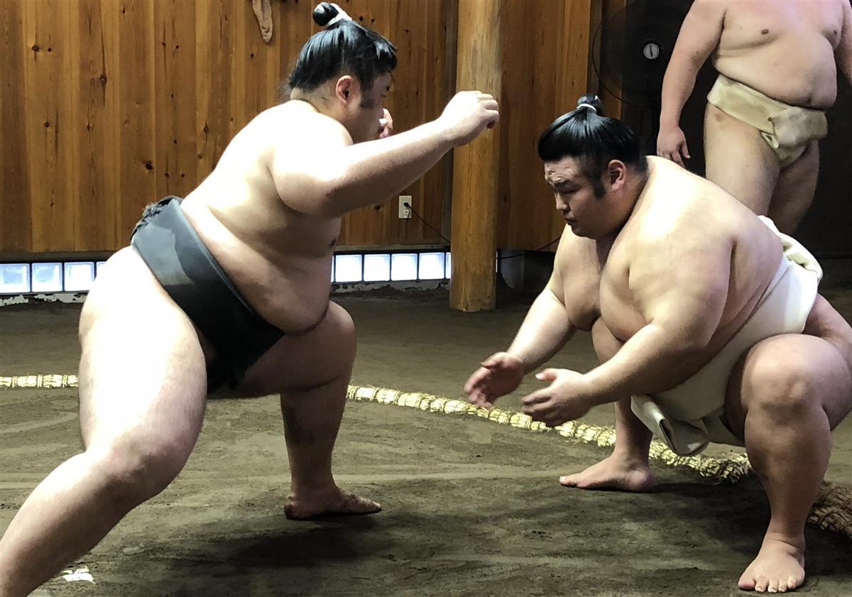 たかの しょう 相撲