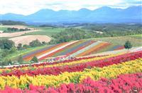 【動画】美瑛町「四季彩の丘」 北の大地彩る虹色ストライプ