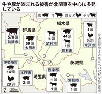 【動画】相次ぐ家畜ドロボウ 被害は700匹以上 牛、豚、鶏はどこに…