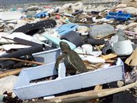 【知ってる?! 海洋プラスチック(1)】糸くずの生き物への影響