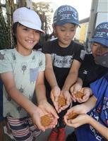 日本のへそで金ごま収穫 兵庫・西脇の小学生
