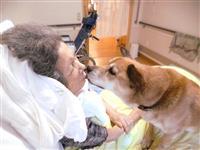 【ゆうゆうLife】最期に寄り添う「看取り犬」の奇跡 ペットと暮らせる特養