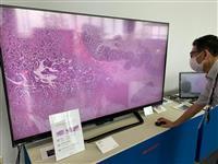 「マイクロLED」で韓国から市場奪還へ シャープ、10月1日にディスプレー事業を分社化