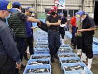 フグシーズン到来 下関・南風泊市場で初競り