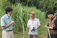 耕作放棄地でゾウの餌用サトウキビ 宇佐のサファリパークと若手農家、有効活用にコスト削減