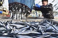 サンマ、待ち望んだ大漁 港活気、東北で初水揚げも