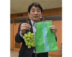 ブドウを甘く大きく育てる果実袋 信州大がナノファイバー使い開発