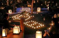 【動画】秋の夜長しっとり 16日から京都・東林院で夜間特別拝観