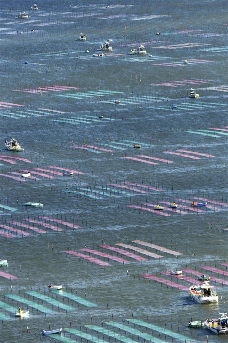 有明海でカラフル網にノリ種付け