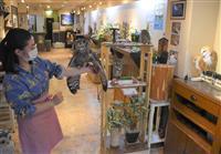 奈良「フクロウカフェ」一時閉店へ 訪日客回復めどたたず