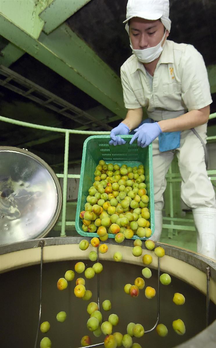 中国で粗悪品 「和歌山梅酒」ブランド保護へGI取得