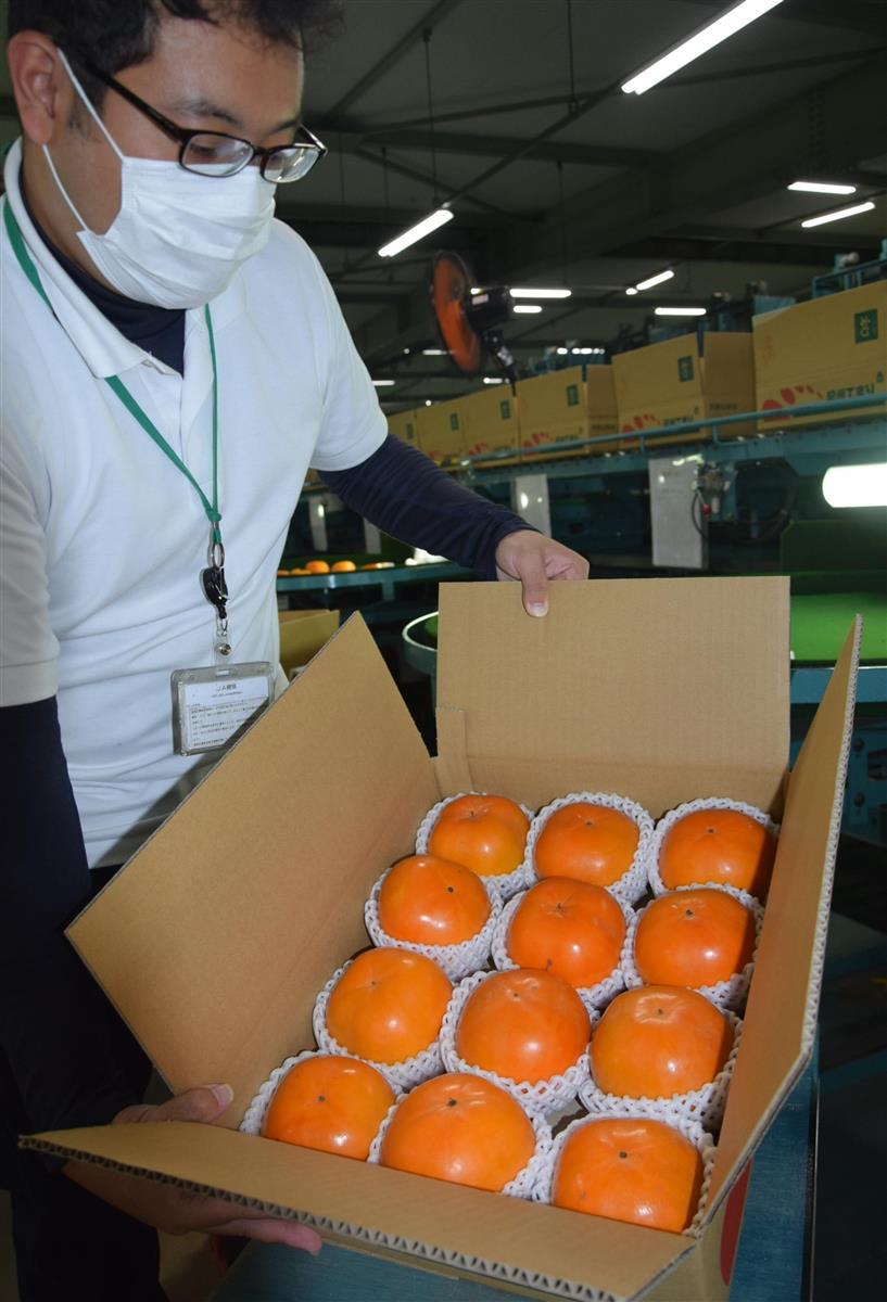 柿の新品種「紀州てまり」初出荷  和歌山・橋本