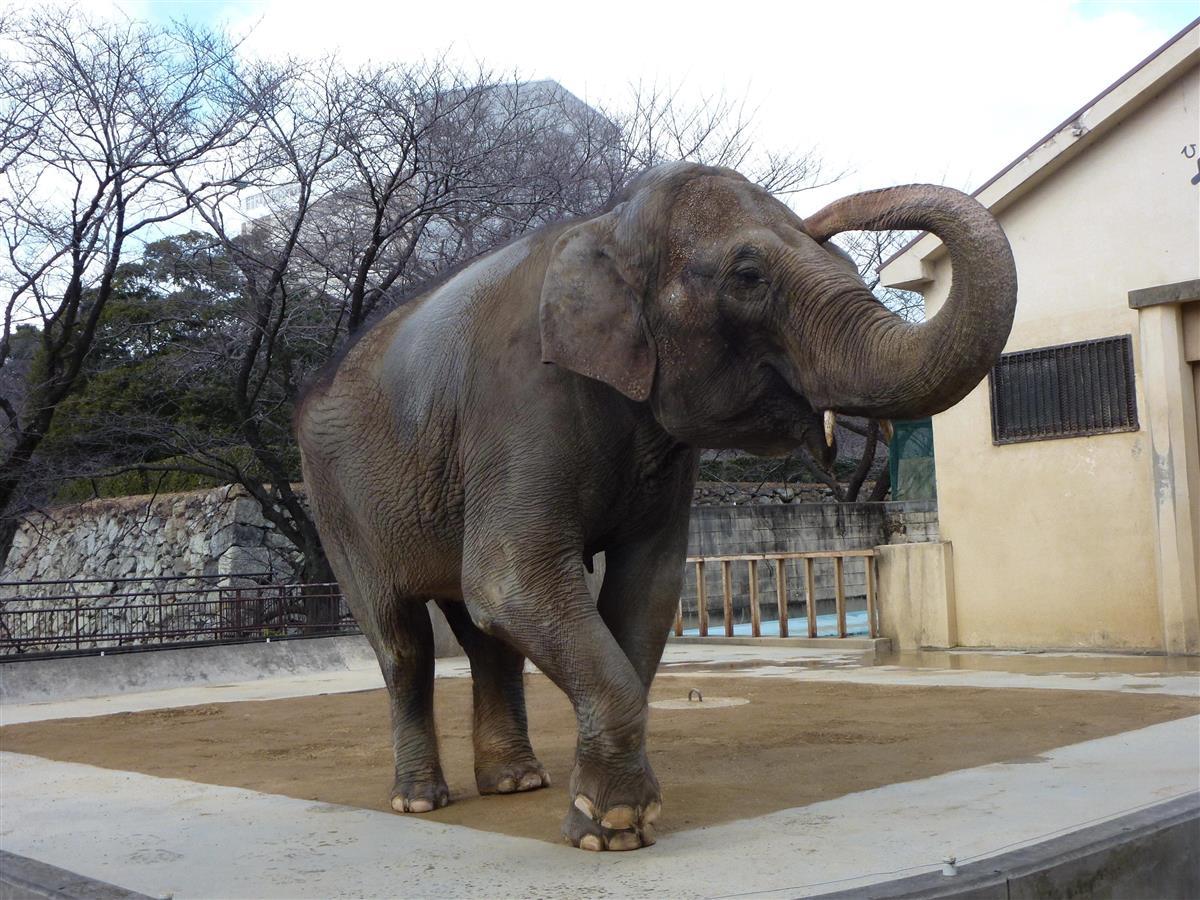 姫路市立動物園のゾウ「姫子」死ぬ 43歳 園のシンボル的存在