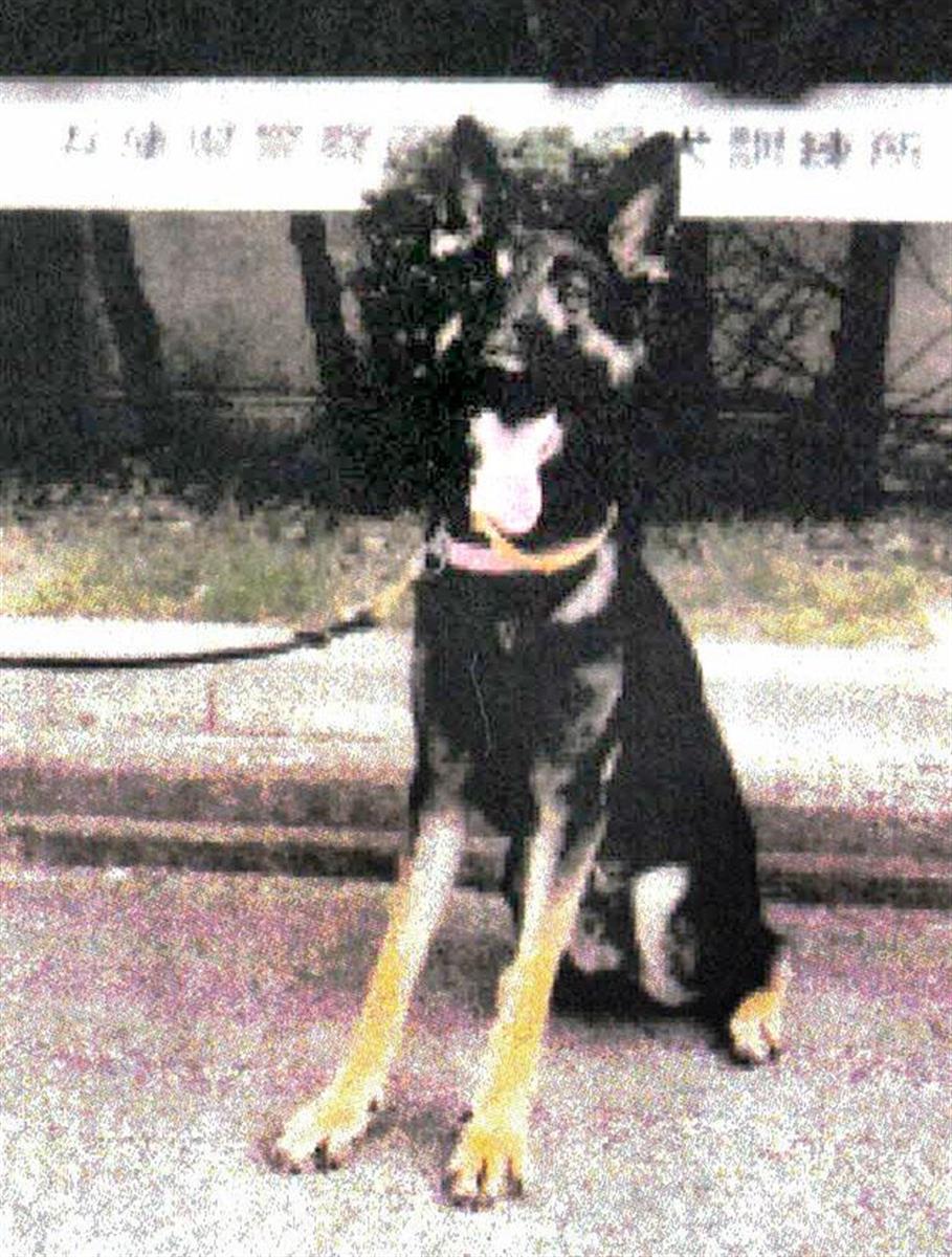 捜索中に山中で警察犬逃げる 兵庫県警、雄のシェパード