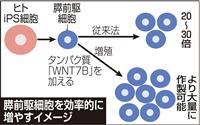 iPS細胞から膵臓細胞を効率的作製 糖尿病治療に期待
