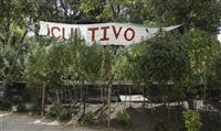 世界最大の大麻市場誕生か メキシコ上院、合法案可決