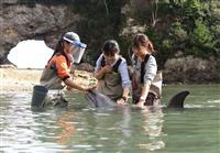 【くじら日記】「ビーチでふれあい」浅瀬のイルカとひと時