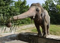 「世界一孤独なゾウ」移送 パキスタンからカンボジアへ
