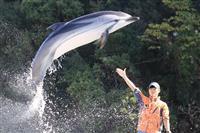 【くじら日記】国内水族館唯一のスジイルカ、難しい飼育