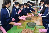 東京・狛江の中学生「銀杏募金」30年 コロナ禍で医療従事者へ寄付