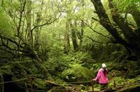 【島を歩く 日本を見る】時を超え、命をつなぐ神秘の森 屋久島(鹿児島県屋久島町)